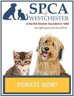 Donate To The SPCA of Westchester